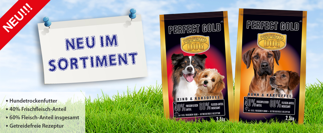 Perfecto Dog GOLD