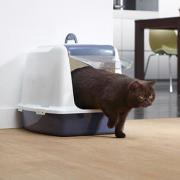 Perfecto Dog
